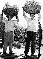 Happy Puerto Rican workers as imagined by boomberg